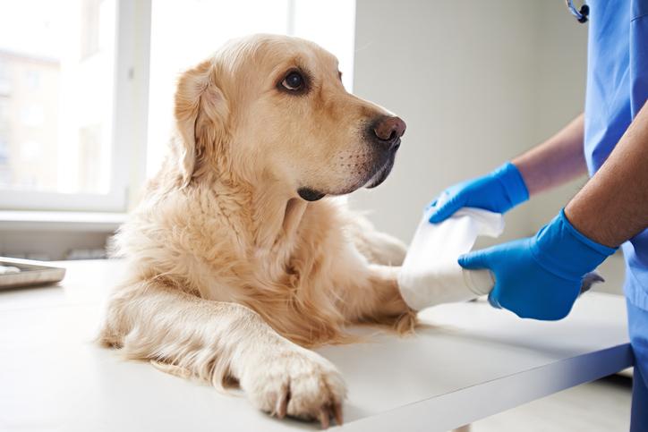 Färre hundar behandlas med antibiotika