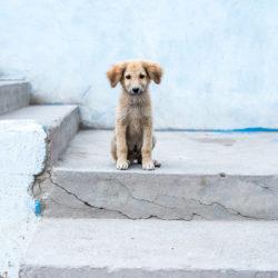 Skaffa hund på olika sätt