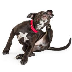 10 svar om hundar och foderallergi