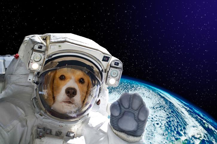 Vad hjälper hundar oss med i framtiden?