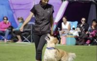 Hundlivet är glädje