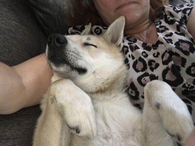 Sömniga vovvar!