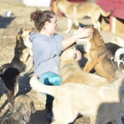Prishtina dog shelter, avsnitt 5: Libra