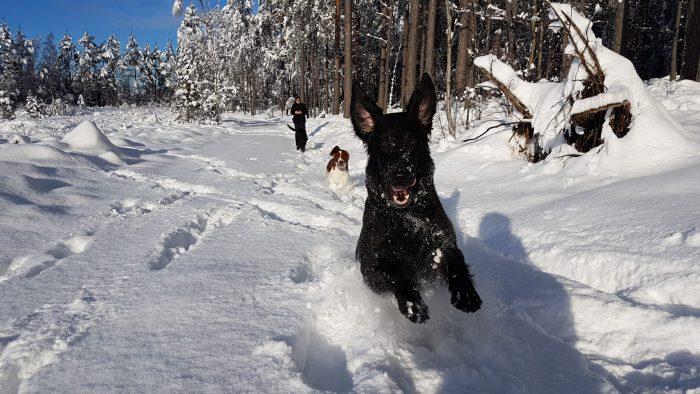 Sportlovsvovvar som gillar snö