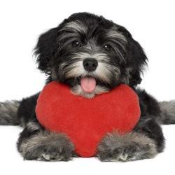Hur firar ni alla hjärtans dag?