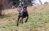 1 mars – dags att koppla hunden! Eller klarar ni frestelser ändå?