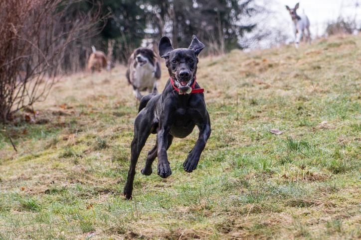 1 mars - dags att koppla hunden! Eller klarar ni frestelser ändå?