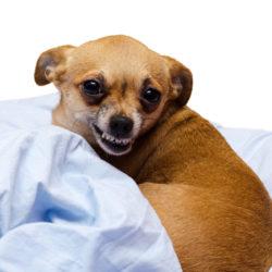Morrar hunden? Var tacksam.