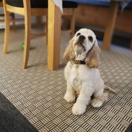 Efterlysning: Läsarbilder på Härliga hundar