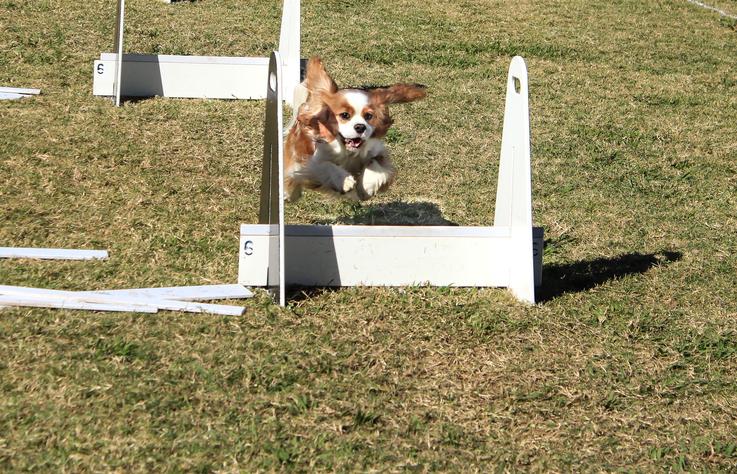 Flyball – hundsport med full fart