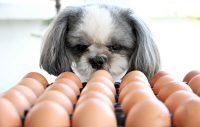 Får hunden äta ägg?