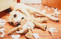 12 saker att göra i stället för att bli arg