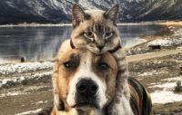 Henry och Baloo – bästa vänner