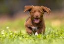Tävling: Bästa bilden med tema lyckliga hundar