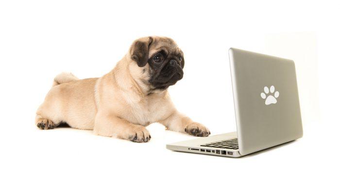 Nu registreras hundar som opereras för andningsproblem