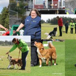 Hundsporten som passar alla