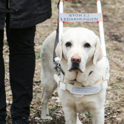 Internationella ledarhundsdagen