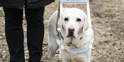 Internationella ledarhundsdagen