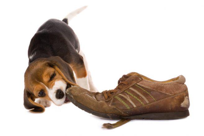 8 farliga saker för hunden i ditt hem