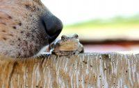 Gör trädgården hundsäker
