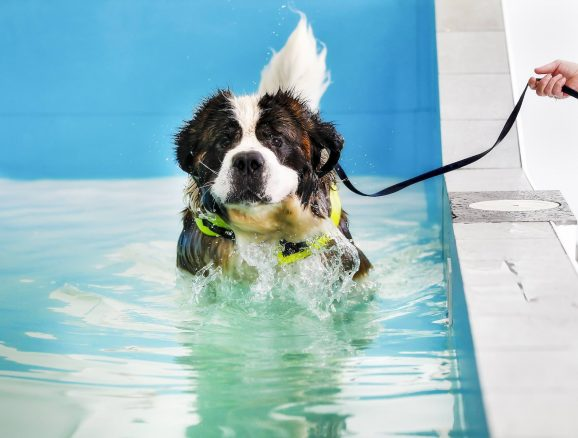 10 skäl att simträna hunden