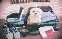 Checklista inför resan utomlands