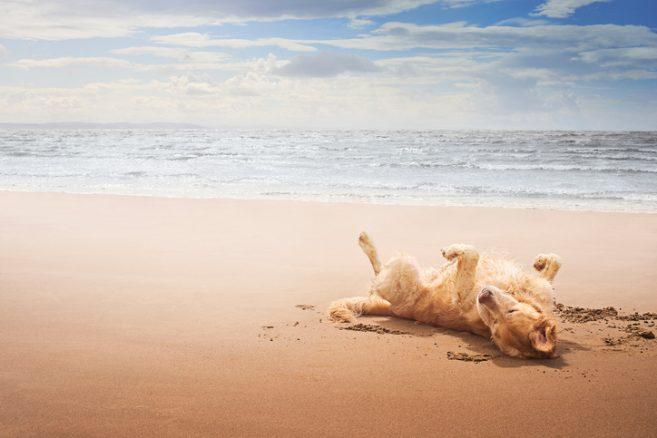 Ska hunden med på semestern?