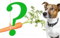 Kan en hund vara vegan?