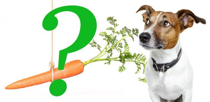 Kan hunden bli vegetarian?