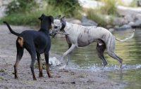 Skydda hunden mot sommarens faror