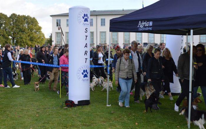 Gå en hundpromenad och stöd Hundstallet