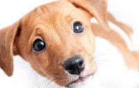 Sverige har fått ny Djurskyddslag