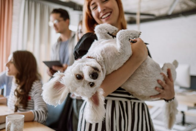 Är hunden välkommen på arbetet?