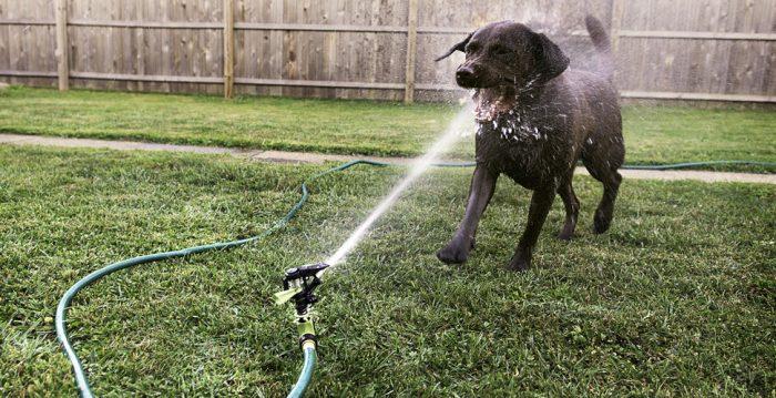 Farligt låta hunden leka med vattenstrålen