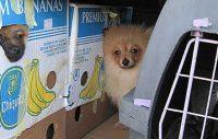 Köp aldrig en hund av okänt ursprung