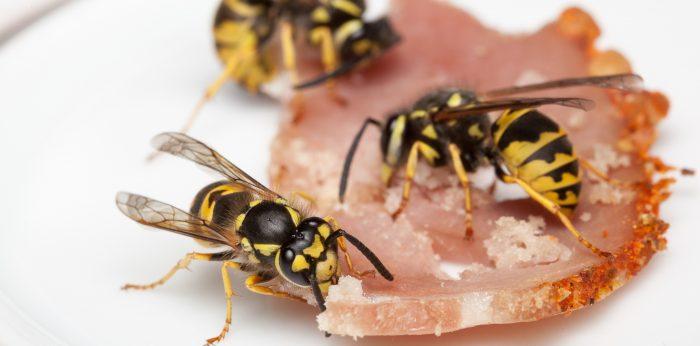 Är bi- och getingstick farligt?