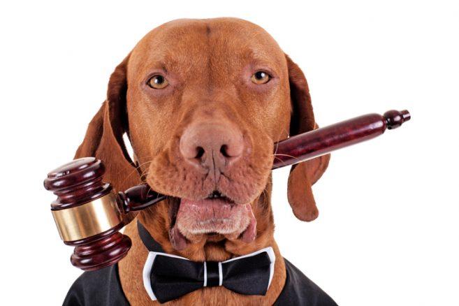 Du är väl en laglydig hundägare?