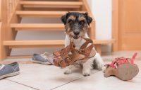 Vilken uppgift har din hund?