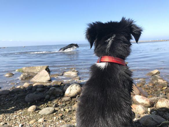 "Vinnare i tävlingen ""Din hunds finaste sommarminne"""