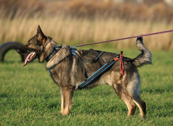 Buddha – årets bästa polishund