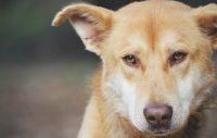 5 saker du gör som kan göra hunden stressad