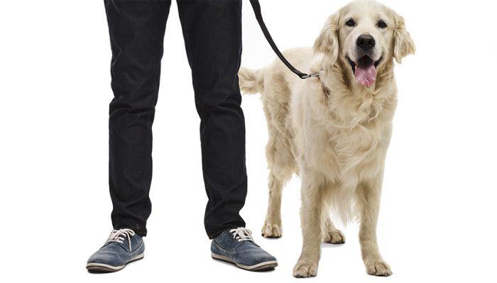 10 skäl att hålla hunden kopplad