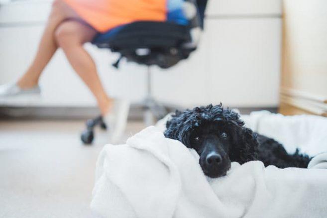 Är det bra med hund på jobbet?