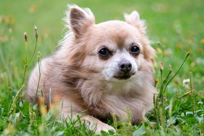 10 skäl till varför gamla hundar är bäst