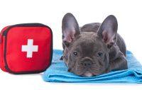 Första-hjälpen kan rädda ett hundliv