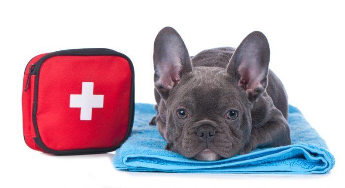 Första hjälpen kan rädda ett hundliv