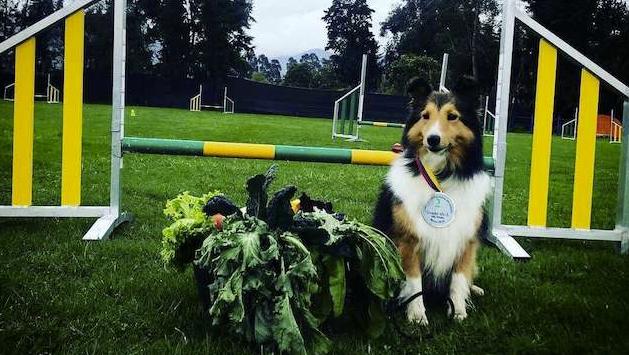 VM-hunden Leela har spårats