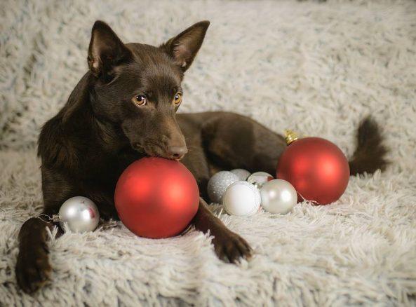 Åsas blogg: Fotograftips för fina hundbilder