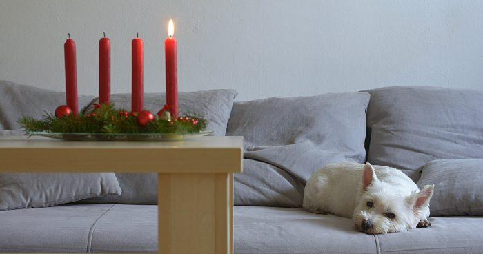 Tryggt advents- och julfirande för hunden