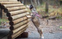 Nackas hundar får nya rastgårdar